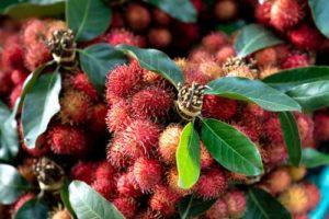 Fructe de rambutan