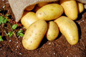 Cartofii sunt legume bogate în carbohidrați