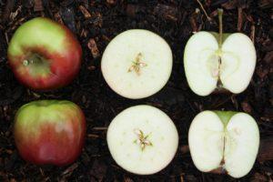 Două soiuri de mere tăiate pentru a putea fi observate semințele