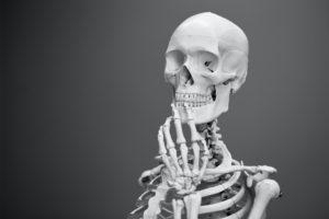 Model de schelet uman