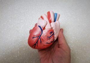 Persoană ține în palmă modelul unei inimi în dimensiune naturală