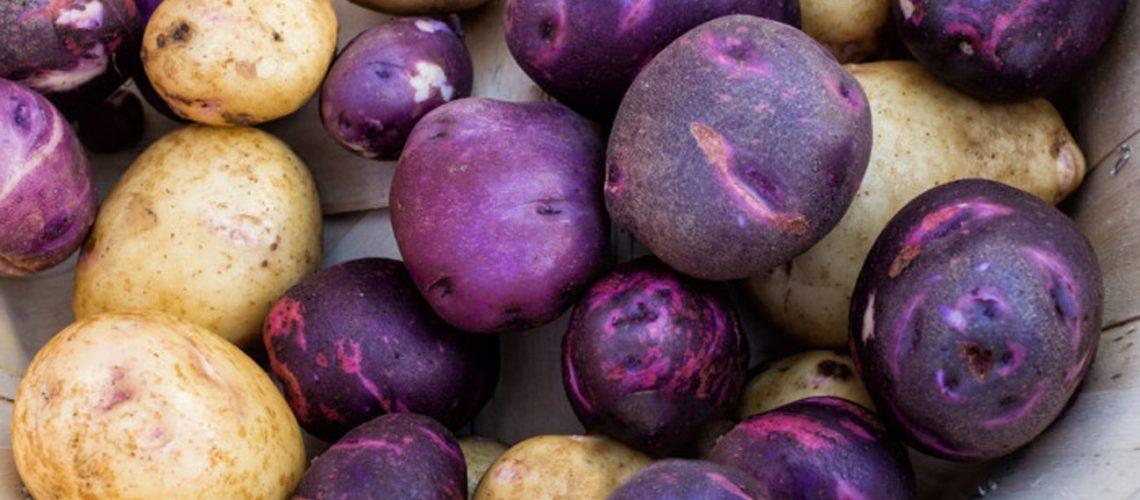 Cartofii mov au apărut în America de Sud
